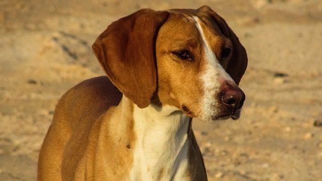 Les 7 avantages d'avoir un chien bien dressé - Méthode